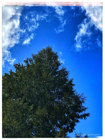 Blue Sky Sky Blue Tree Plant Low Angle View Cloud - Sky Transfer Print Nature Auto Post Production Filter Beauty In Nature Growth Outdoors Day Sunlight Backgrounds