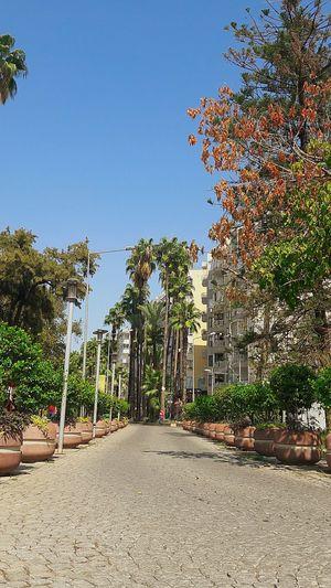 Antalya Antalya Lara Lara City No People City Street City Center Palm Palm Trees Palmiyeler Sokagı Sehir Merkezi Sehirmerkezi Clear Sky Hot Day Sıcakhava Yaz Antalya Turkey StillLifePhotography