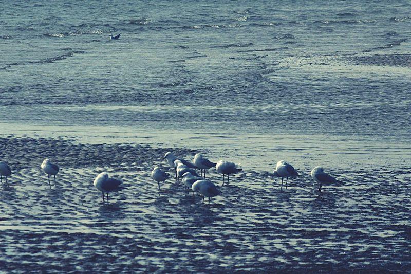 Seagulls on the sand Seagulls Beach Dab.