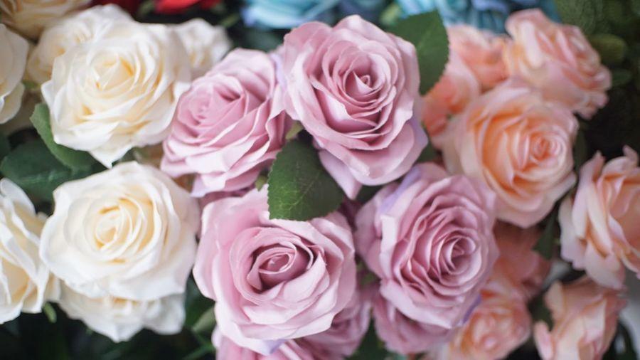 Rosé Rose -
