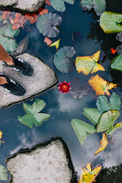 Water Leaf High Angle View Nature Outdoors Day Floating On Water Only Women Beauty In Nature Flower Adult One Woman Only Adults Only People One Person Close-up Feet New Balance Azores Azores Islands Azores, S. Miguel Terra Nostra Park