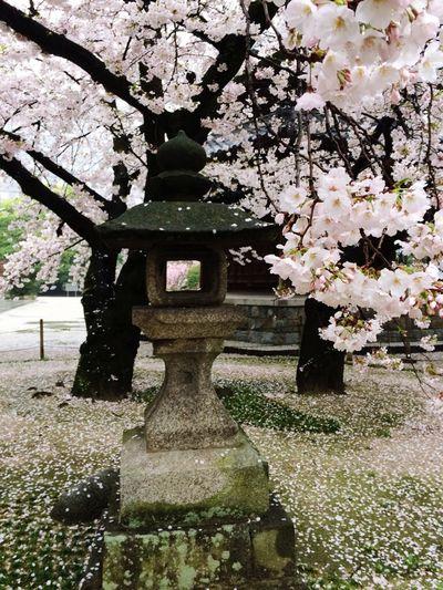 First Eyeem Photo Art Is Everywhere Japan Sakurai