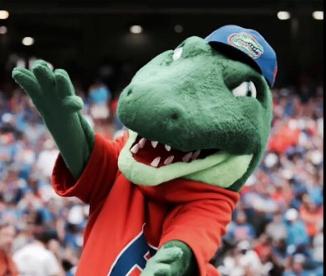 Gators Albert Sports Florida Gainesville Stadium Fan - Enthusiast Alligator Orange And Blue Excitement Sport