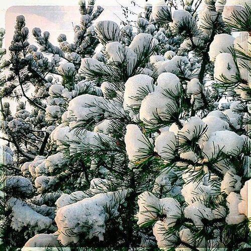 Halden Snow
