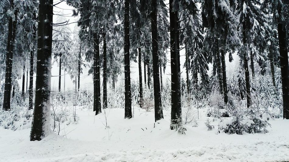 Hoherodskopf Schnee Snow Winter Landscape Outdoors Cold Temperature Forest Tree Nature Beauty In Nature Tree Trunk Scenics No People Day Sky