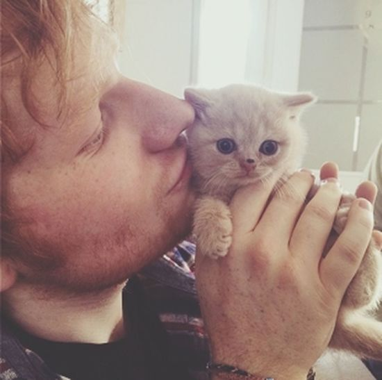 Ed Sheeran cats