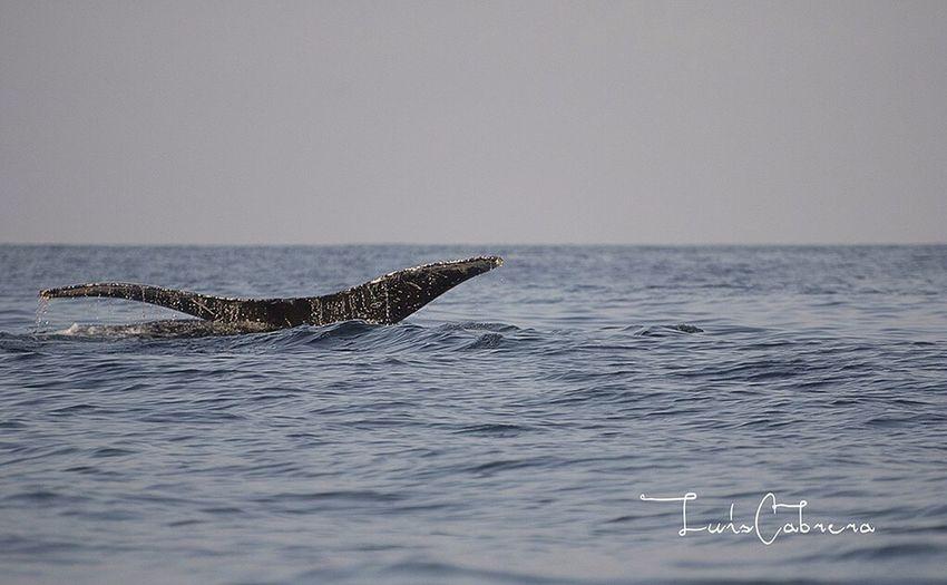 Sea Seascape Sea And Sky Humpback Whale Ballenas Jorobadas Mar Fotografia Photography Mexico Riviera Nayarit