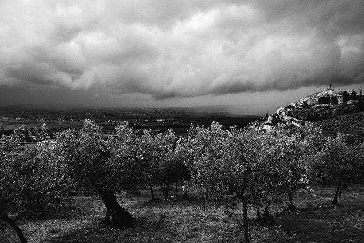 Beauty In Nature Cloud - Sky Colline Hills Italia Italy Landscape Natura Nature No People Outdoors Panorama Scenics Sky Storm Tempesta Trevi Ulivi Umbria
