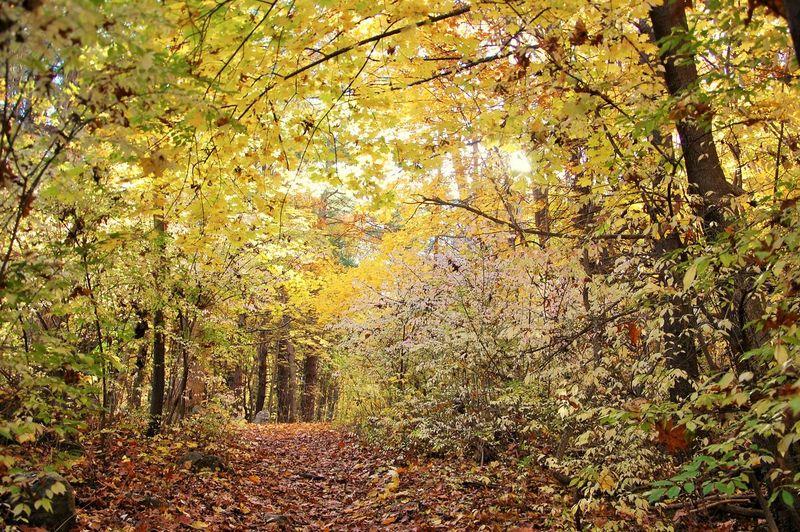 #fallcolors #greenplants #intothewoods # #path #trailinthewoods #woods #yellow #yellowleafs