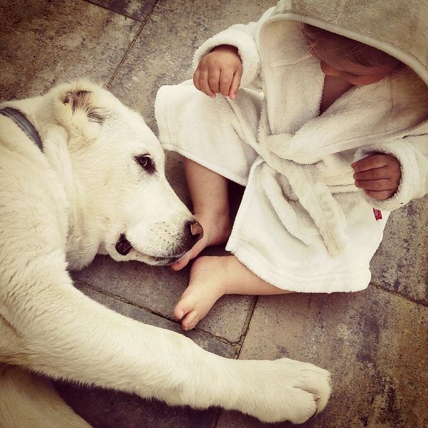 Best friends Alabai Central Asian Shepherd Boy Child Pets Lying Down Relaxation Dog Sleeping High Angle View Bedroom Lying