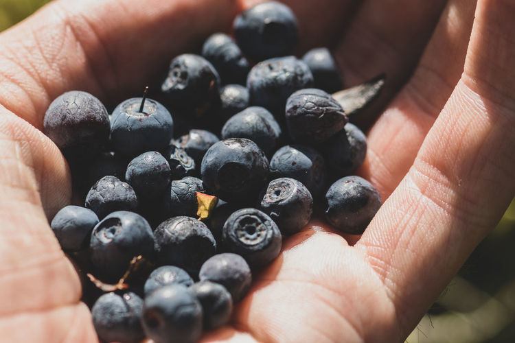 Close-up of hand holding blueberries