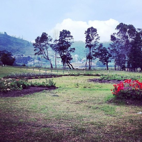 Lake Gregory Landscaping Project nuwara eliya best photo nature scenery flowers love awesome