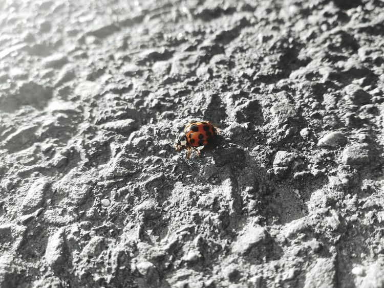 Animal Themes Nature Animals In The Wild One Animal Outdoors Day Close-up No People Beach Ladybeetle Ladybird Red Close Up Lost In The Landscape