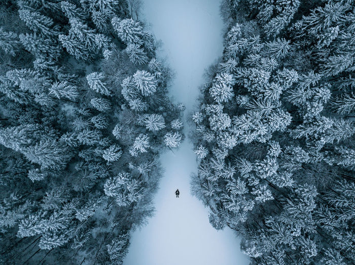 Aerial photograph of a Person lying on a frozen lake surrounded by a symmetric snowy pine forest at Eibsee, Germany Beauty Beauty In Nature Cold Temperature Day Forest Frozen Landscape Nature Outdoors person Pinaceae Pine Tree Scenics Snow Snowcapped Mountain Snowflake Snowing Spruce Tree Tranquil Scene Tranquility Travel Destinations Tree Weather Wilderness Area Winter The Great Outdoors - 2018 EyeEm Awards