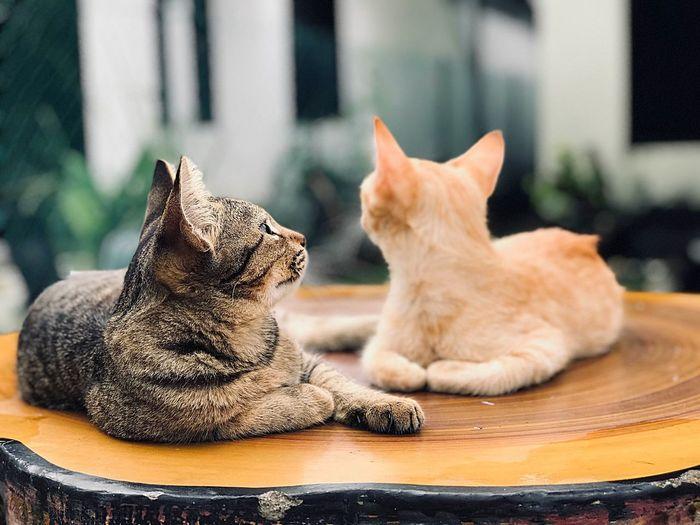 Ailurophile Cat