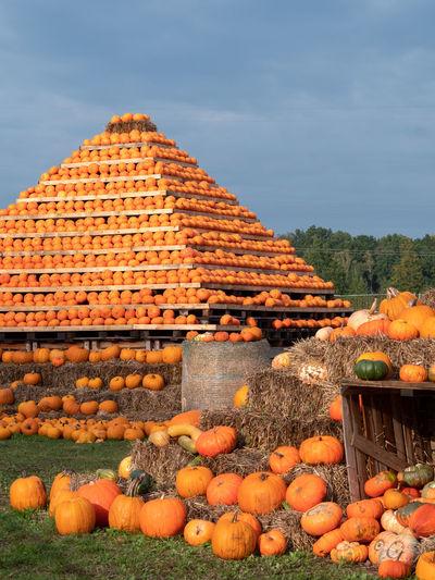View of pumpkins against sky