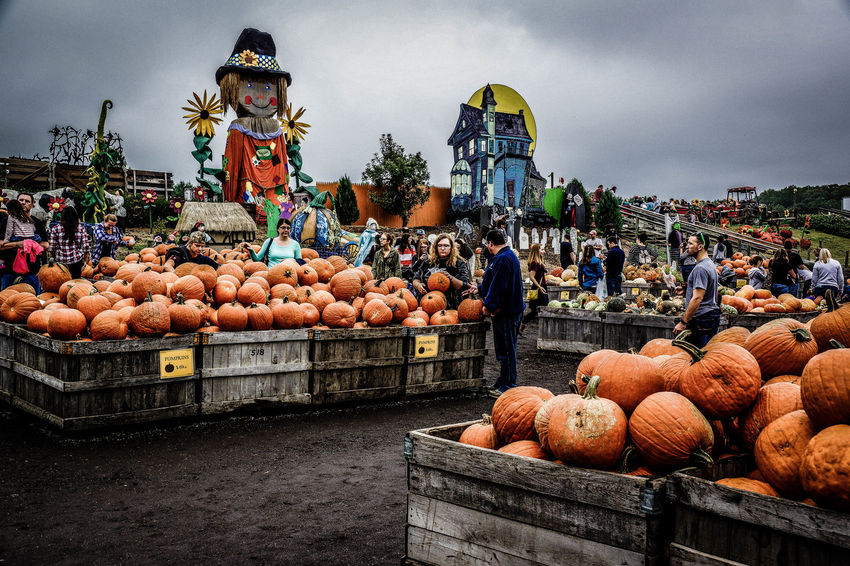 Abundance Choice Collection Day Display Fall Food Food And Drink For Sale Freshness Halloween Healthy Eating Market Market Stall Outdoors Pumpkin Repetition Retail  Sale Selling Stack Street Market Variation Variety Vegetable