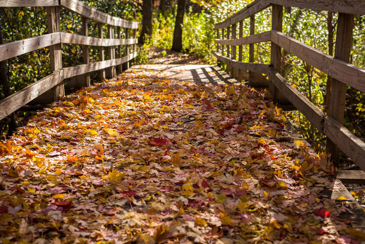 Leaves On Boardwalk At Forest