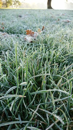 Grass Outdoors Close-up No People The Week Of Eyeem EyeEm Best Shots Eyeem Market Team Eyeemphoto Playing With The Light Eyeem Market The Eyeem Collection At Getty Images The Week On Eyem Showcase November EyeEm Team EyeEm Gallery Green Color Frosty Mornings Freshness Nature Day Eyeemphotography Beauty In Nature