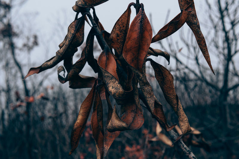 Close-up of dry leaves on branch during winter