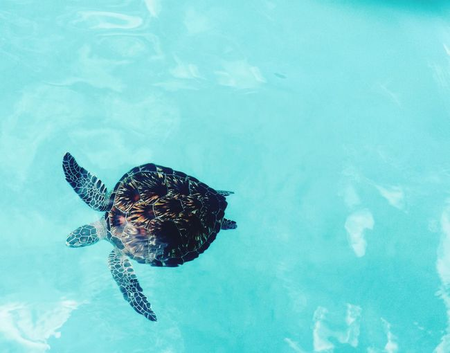 One Animal Animal Themes Swimming Turtle Animals In The Wild Water Sea Turtle Animal Wildlife Nature Reptile Day No People Outdoors Underwater Sea Life Beauty In Nature Sea Close-up UnderSea Tortoise Shell