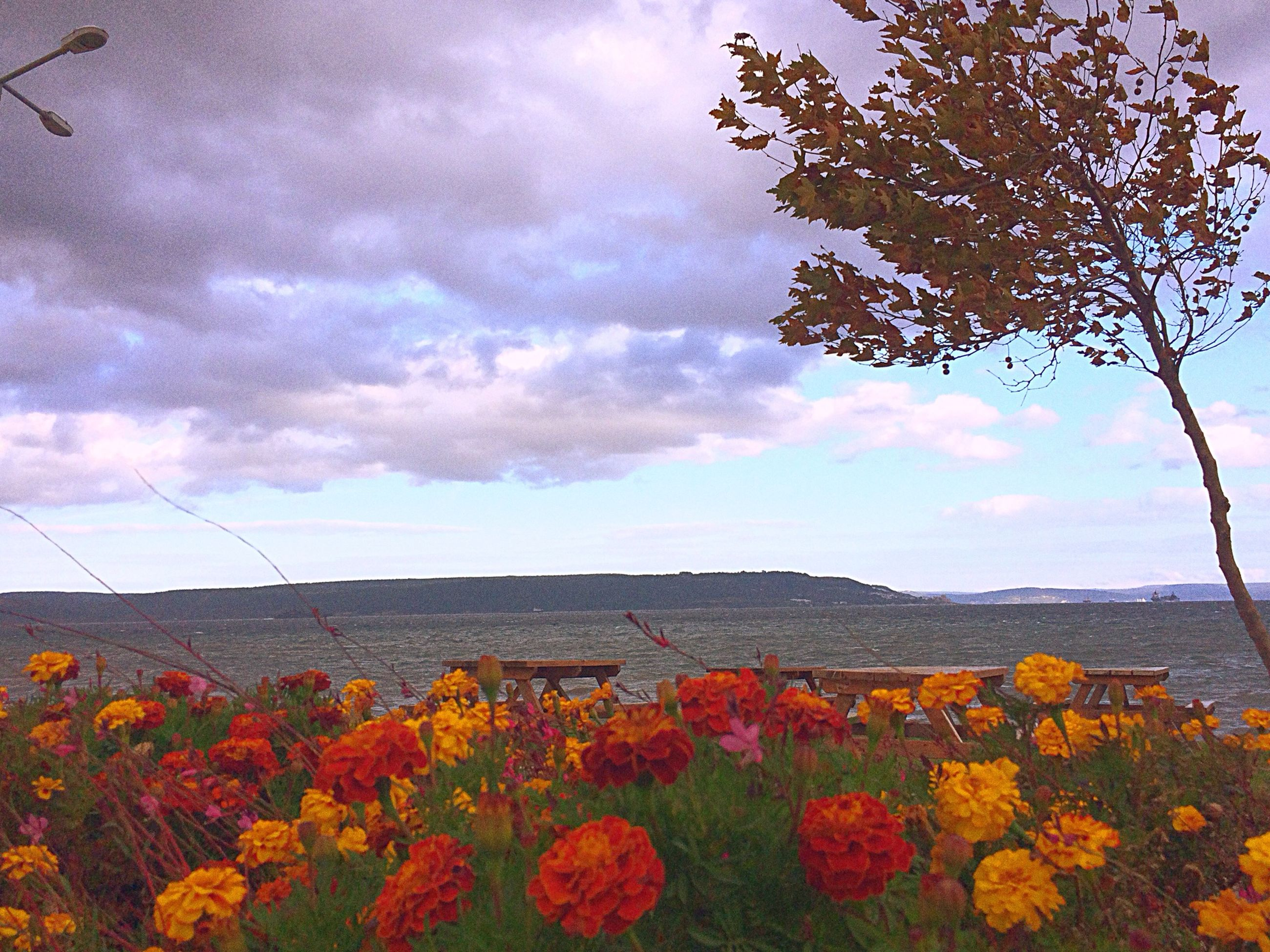 flower, sky, beauty in nature, cloud - sky, nature, growth, tranquil scene, scenics, cloudy, freshness, tranquility, cloud, tree, landscape, fragility, field, plant, mountain, blooming, rural scene