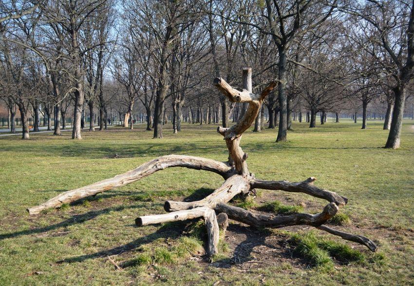 Vienna Nature Wood Park