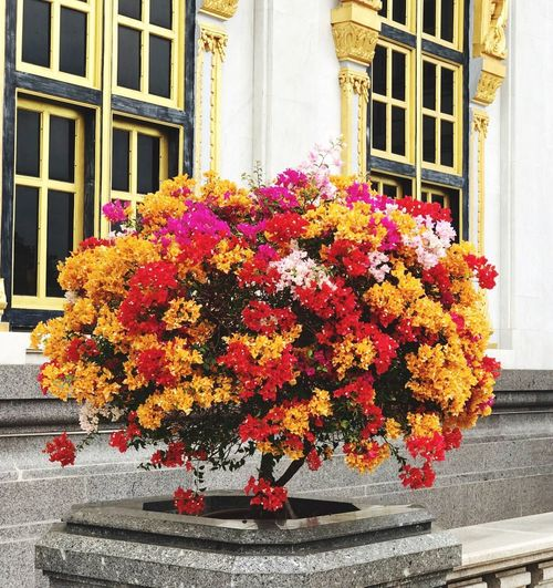 Colorfull flower Flower Window Architecture Building Exterior Built Structure Growth Day Outdoors Blooming Plant Fragility No People Freshness Yellow Window Box Nature Flower Head Beauty In Nature Close-up