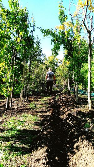in the vegetable garden Man Man In The Land. Vegetable Vegetablegarden Farm Nature Nature Photography Plant Land Green Plant