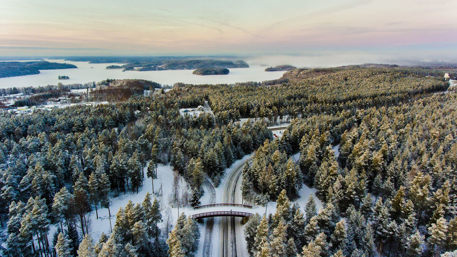 Aerial View Of Forest In Winter At Sunrise