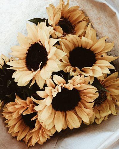 Flower Freshness No People Close-up Nature Sunflower Flower Head