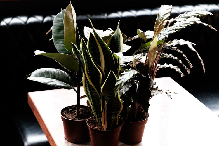 Close-up of potted plant leaves