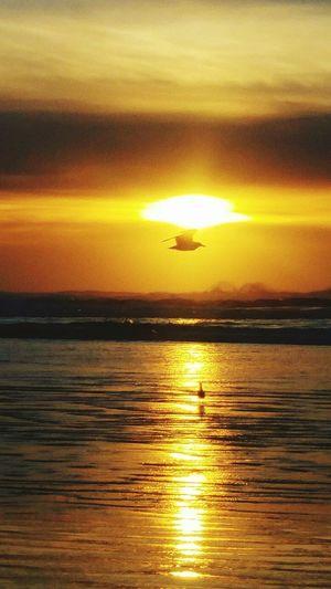 Seaside Oregon Oregon Coast Ocean View Ocean Beach Sunset Seagulls And Sea Seagull