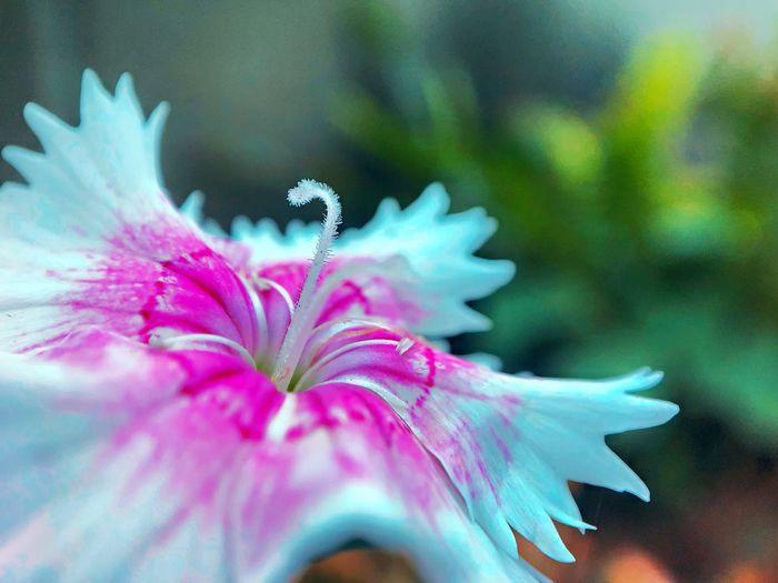 Dramatic petals
