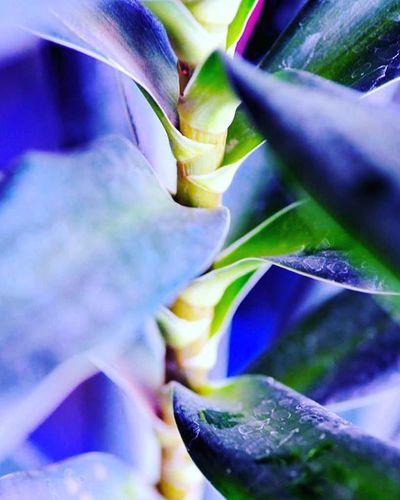 Stem of a Leafy plant Leaves A little purple color in the mix =) 3) Tv_depthoffield 4) Nature_brilliance 5) Fotofanatics_nature_ 6) Natureandlife 7) Rsa_nature 8) Dof_addicts 9) Tgif_nature 0) Nature_brilliance 1) Resourcemag 2) Macro_club 3) Macro_spotlight 4) Pocket_dof 5) Igglobalclubmacro 6) Jj_indetail 7) Splendid_dof 8) Macroandflora 9) 1001macro 0) Bns_macro 1) Best_macro 2) Photoflair_macro 3) Loves_united_macro 4) Macro_mood 5) Macro_holic 6) macro_sultans 7) my_daily_macro 8) macro_secrets 9) macroclique 0) my_daily_macro