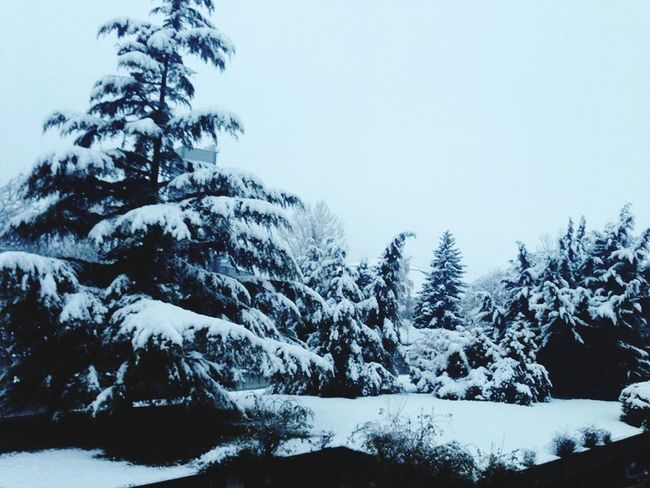 Nature Perfection Neige❄ Blanche Neige Sapin Sapin 🌲 Froid Glacial Froid 😥🎅💪