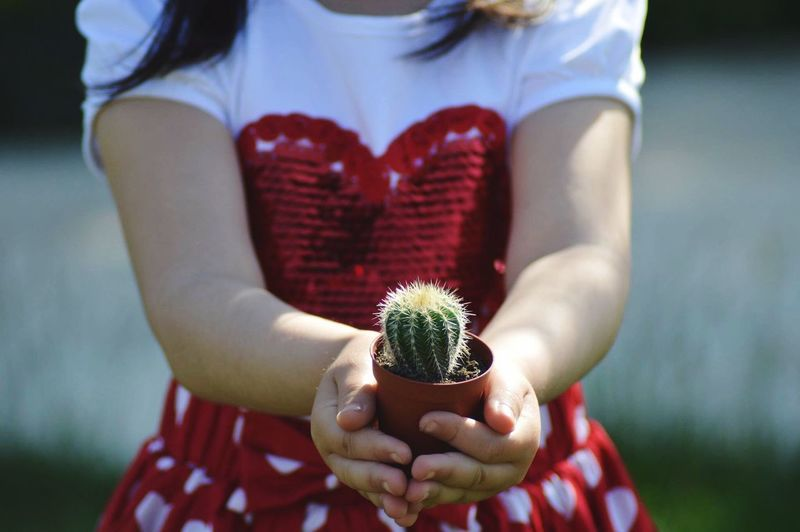 Midsection One Person Focus On Foreground Holding Women Plant Front View Real People Lifestyles Day Flower Red Nature Human Hand Outdoors Leisure Activity Adult Casual Clothing Growth Hand