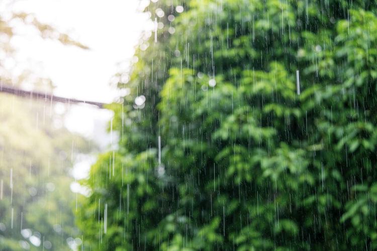 Close-up of wet plants in rainy season