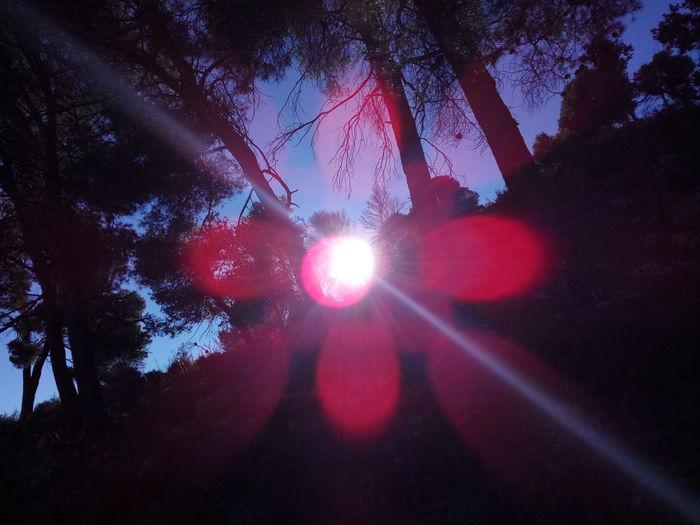 Sun flower 🌞🌟🌼 Morning Morning Light Sunlight Flower Flower Sunrise Beautiful Nature Beautiful Astronomy Tree Galaxy Star - Space Illuminated Light Beam Red Lens Flare Sky Shining Sun Silhouette Sunrise Sunbeam Orange Color