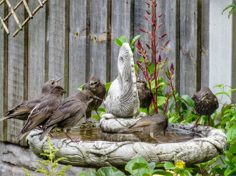 """""""Bathtime"""" No People Outdoors Bird Day Tree Trunk Nature Animal Themes Perching Tree Close-up Beauty In Nature Photographer EyeEm Best Shots EyeEm Gallery Enhanced Photograph EyeEm Selects Photooftheday Photography Spread Wings Growth Scenics Photo Bathtime Wildlife Photography Wildlife & Nature"""