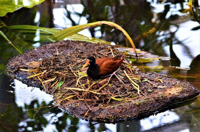 View of bird in nest