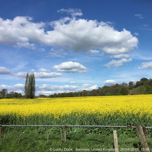 Natures bright colours Paint The Town Yellow Agriculture Beauty In Nature Cloud - Sky Crop  Day Farm Field Flower Growth Landscape Nature No People Oilseed Rape Outdoors Rural Scene Scenics Sky Tranquil Scene Tranquility Tree Yellow
