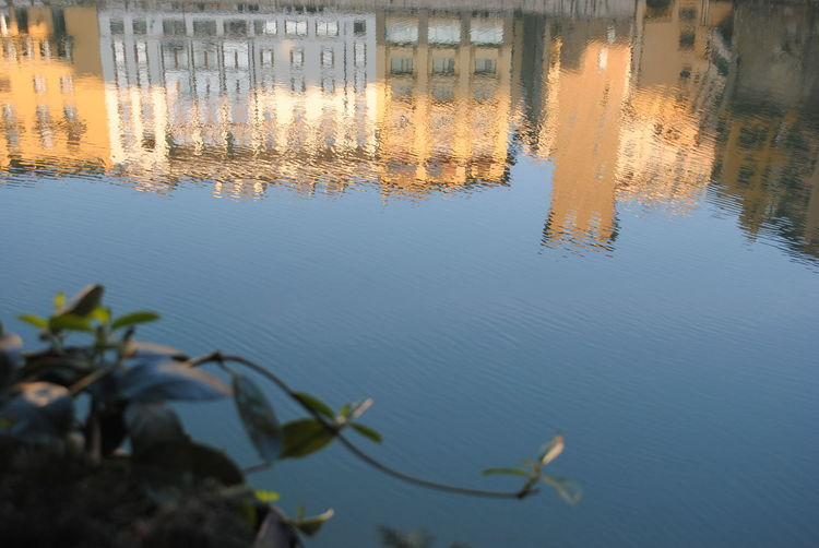 Firenze, Italy MorningFlorence Turismo TuristaFirenze Relaxing Light Rilassante Fiume Arno Fiumearno Firenze Arno River Arno River, Florence Arno  Riflesso Riflessosullacqua Riflesso Sull'acqua Firenze Pianta Water Reflection Sky Close-up