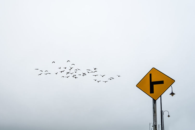 Low angle view of road sign with birds flying in background against sky