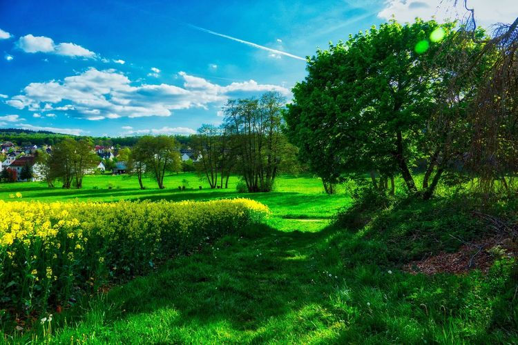 Home Beauty In Nature Tree Nature Growth Green Color Tranquility Tranquil Scene Field Landscape Sky Scenics Grass Day No People Outdoors Cloud - Sky Plant Agriculture Rural Scene Freshness Home Clouds And Sky EyeEm Gallery AMP PICTURES