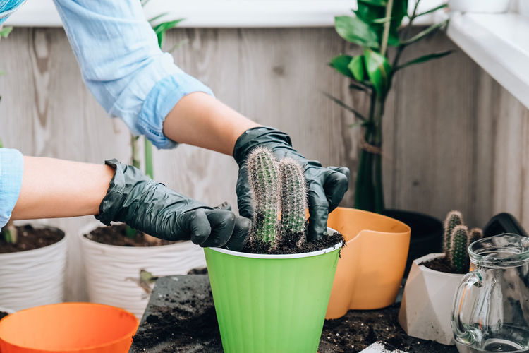 Man working on potted plant