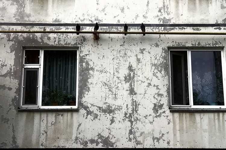 Rotting Window