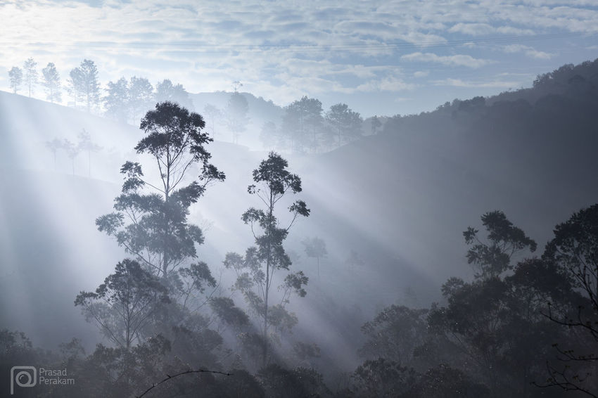 morning rays Beauty In Nature Cloud - Sky Dawn Day Dreamlike Ethereal Fog Foggy Growth Majestic Mist Mountain Mountain Range Munnar Nature No People Non-urban Scene Outdoors Remote Scenics Sky Solitude Sunbeam Tranquil Scene Tree