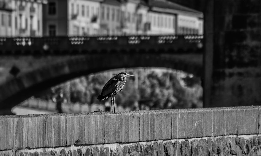 Animal Animal Themes Animal Wildlife Animals In The Wild Architecture Bird Building Exterior Built Structure Day Focus On Foreground Nature No People One Animal Outdoors Perching Seagull Selective Focus Spread Wings Vertebrate Wall Wood - Material
