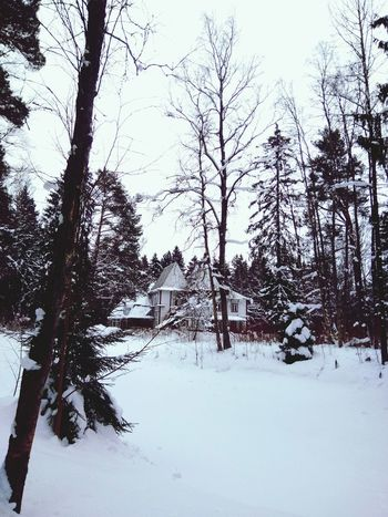 Mistery Winter Snow Nature Frozen Tree
